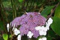 Kontrast, Farben, Blumen, Fotografie