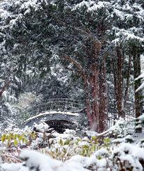 Baum, Schnee, Gestöber, See