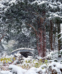 Park, Baum, Brücke, Schnee