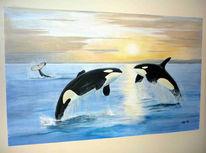 Ozean, Schwertwale, Schwertwal, Sonnenuntergang