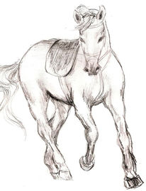 Reiten, Pferde, Skizze, Zeichnung