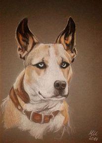 Hundeportrait, Zeichnungen