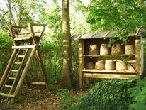 Garten, Biene, Natur, Fotografie