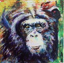 Ausdruck, Tiere, Farben, Affe