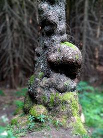 Geist, Baum, Berge, Fotografie