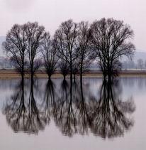 Hochwasser, Baum, Fotografie, Spiegelung