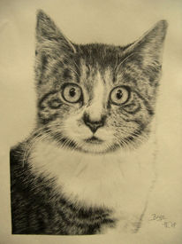 Katze, Portrait, Tiere, Haustier