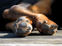 Freunde, Hund, Pfote, Postkarte