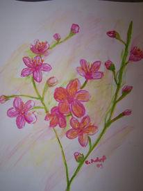 Aquarellmalerei, Blüte, Blumen, Kirschblüten