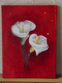 Callas, Blumen, Blüte, Calla