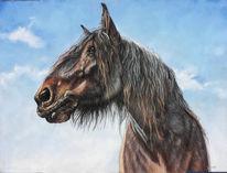 Pony, Kaltblut, Pferde, Himmel