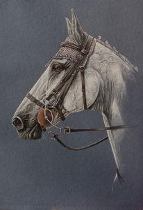 Pastellmalerei, Pferde, Springpferd, Pferdeportrait