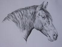 Pferde, Bleistiftzeichnung, Tierzeichnung, Pferdeportrait