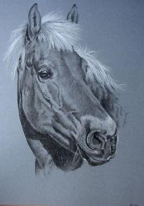 Tiere, Pferdeportrait, Pferde, Tierportrait