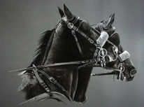 Kohlezeichnung, Kutschpferde, Gespann, Pferde
