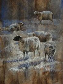 Raureif, Weide, Schwein, Frost
