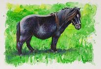 Pony, Shetland pony, Pferde, Wiese