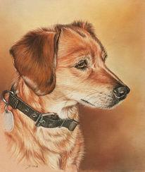 Hund, Pastellmalerei, Tierportrait, Malerei