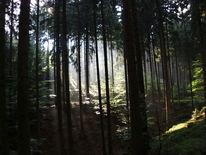 Fotografie, Wald