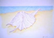 Muschel, Strand, Zeichnungen, Stillleben