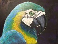 Tiere, Papagei vogel, Portrait, Malerei