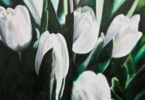 Tulpen, Blumen, Grün, Schwarz