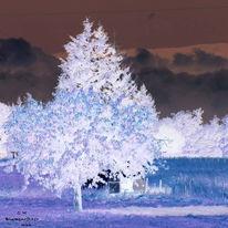 Baum, Burgund, Licht, Fotografie