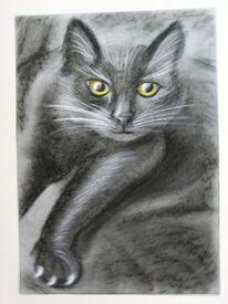 Bestell, Katze, Schwarz, Zeichnungen
