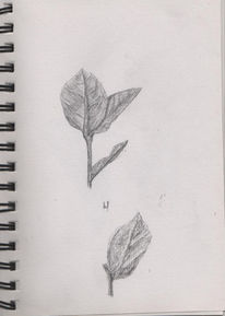 Blätter, Pflanzen, Zeichnungen