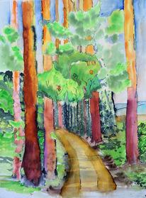 Mai, Grün, Kiefernwald, Unterholz