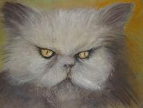 Tiere, Weiß, Katze, Malerei