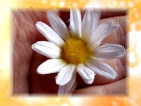 Hand, Glück, Blumen, Fotografie