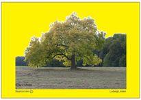 Fotografie, Wiese, Digital, Gelb