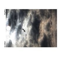 Vogel, Vogelflug, Luft, Himmel