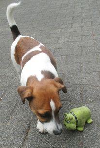 Hund, Tiere, Cnipper von linden, Köln