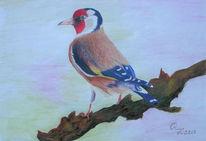 Aquarellmalerei, Tiere, Vogel, Zeichnungen