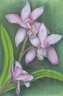 Orchidee, Blumen, Pastellmalerei, Zeichnungen