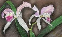Blumen, Orchidee, Zeichnungen, Pflanzen