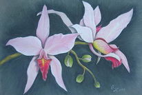 Pastellmalerei, Orchidee, Blumen, Zeichnungen