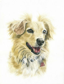 Hund, Fotovorlage, Hundeportrait, Hundepotrait