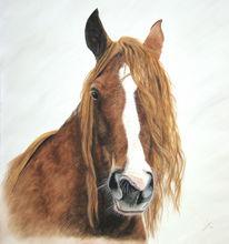 Aquarellmalerei, Pferdeportrait, Malerei, Portrait
