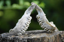 Skelett, Hölle, Zähne, Fotografie