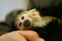 Baby, Affe, Schlaf, Tierkinder