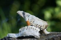 Gebiss, Rauchen, Zähne, Tod