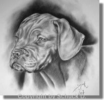 Hund, Rassehund, Welpe, Bordeauxdogge
