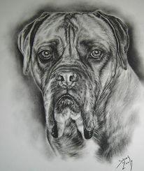 Kohlezeichnung, Bordeauxdogge, Hundezeichnung, Zeichnungen