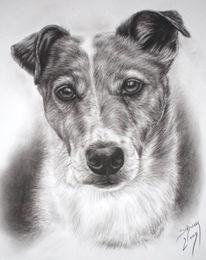 Russell, Hundezeichnung, Terrier, Kohlezeichnung