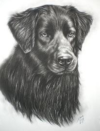 Kohlezeichnung, Hundezeichnung, Retriever, Labrador
