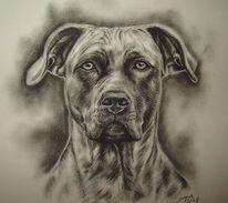 Hundezeichnung, Dogo, Presa, Canario