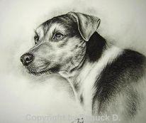 Zeichnung, Kohlezeichnung, Hundeportrait, Russell